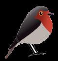 Robin GmbH Webdesign & SEO